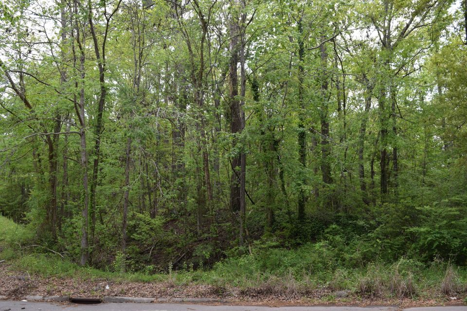 Springview Lane Summerville, SC 29485