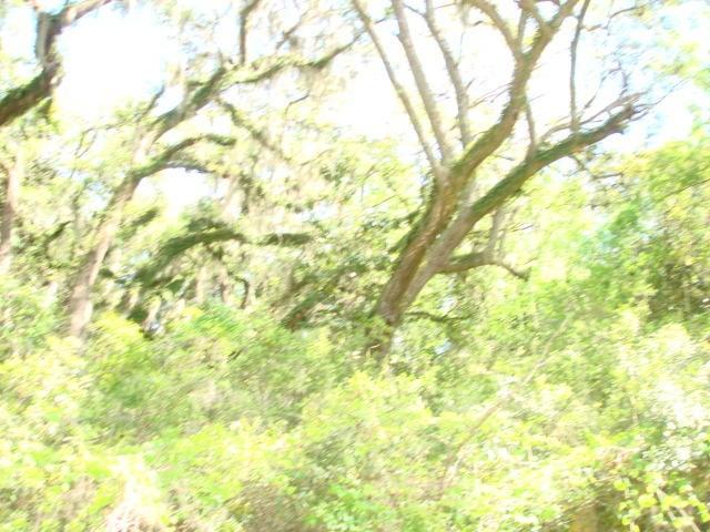 045 Chisolm Plantation Road Edisto Island, SC 29438