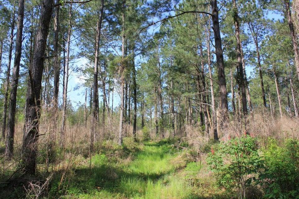 Calamus Pond Road Summerville, SC 29483