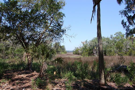 16 Saint Pierre Creek Drive Edisto Island, SC 29438