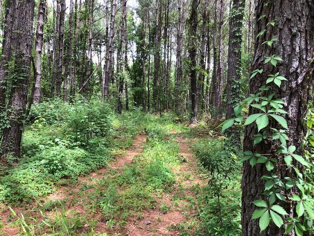 Boy Scout Road Wadmalaw Island, SC 29487
