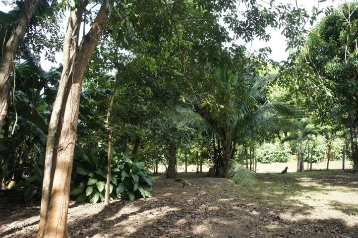 Terreno Alajuela>Orotina>Orotina - Venta:100.000 US Dollar - codigo: 18-26