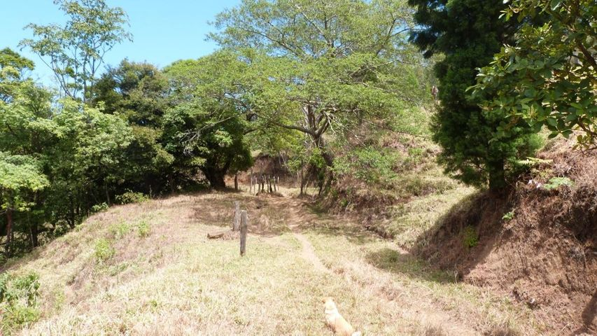 Terreno Alajuela>Cirri>Naranjo - Venta:1.350.000 US Dollar - codigo: 18-151