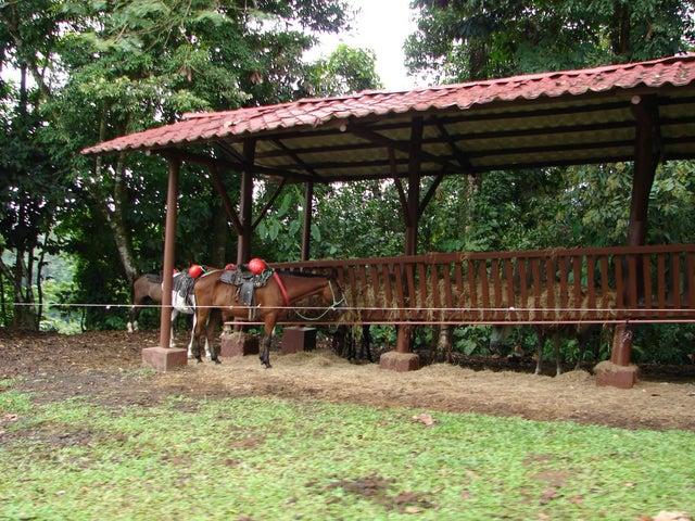Terreno Alajuela>La Fortuna>San Carlos - Venta:625.000 US Dollar - codigo: 19-695