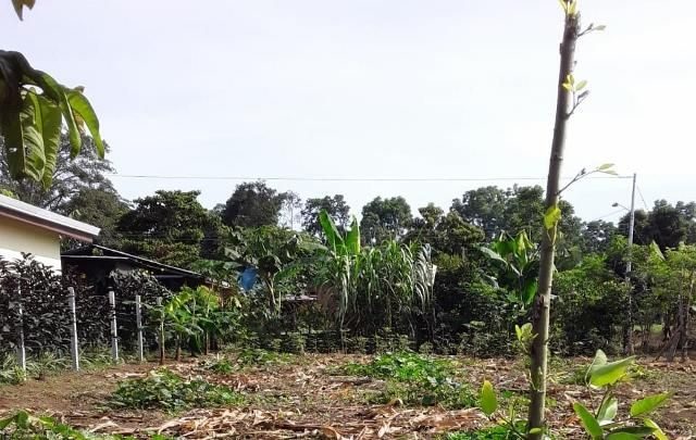 Terreno Limon>Guapiles>Pococi - Venta:15.000 Colones - codigo: 19-832
