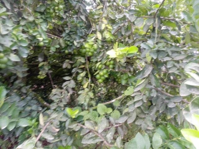 Terreno Limon>Guapiles>Pococi - Venta:155.000 US Dollar - codigo: 19-899
