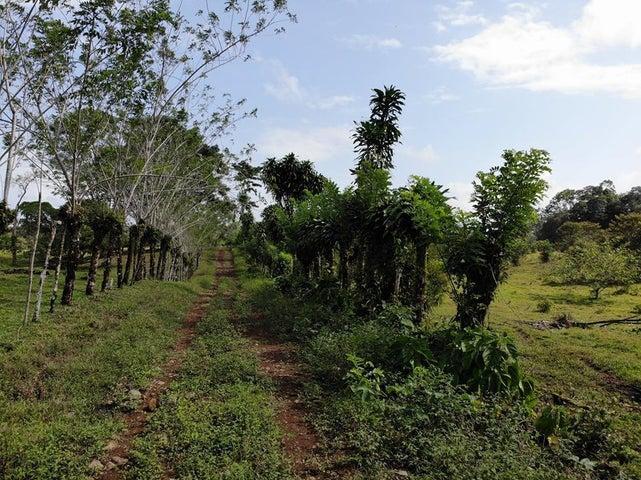 Terreno Limon>Guapiles>Guacimo - Venta:178.000 US Dollar - codigo: 19-1305