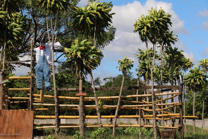 Terreno Alajuela>Alajuela Centro>Alajuela - Venta:2.000.000 US Dollar - codigo: 20-1030