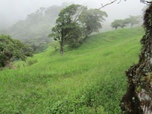 Terreno Alajuela>San Luis>Alfaro Ruiz - Venta:250.000 US Dollar - codigo: 20-1457