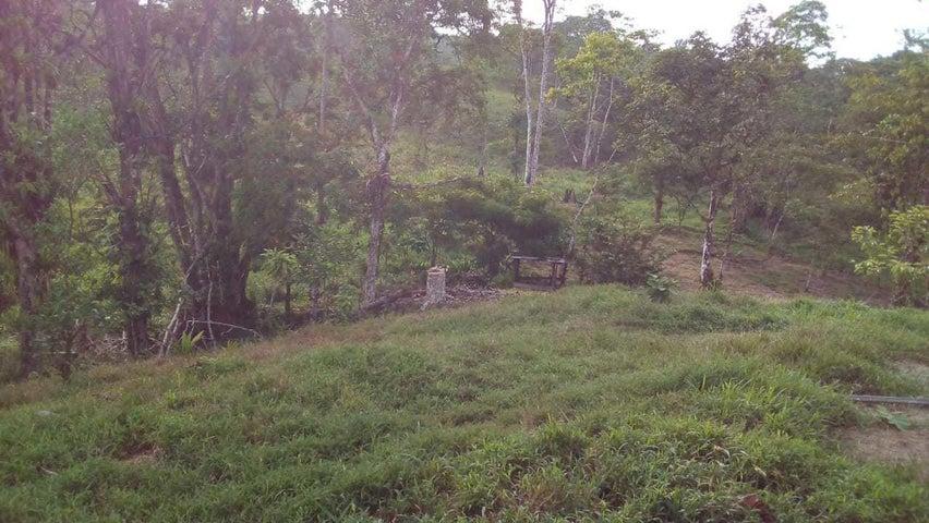 Terreno Heredia>Puerto Viejo>Sarapiqui - Venta:110.000 US Dollar - codigo: 20-213
