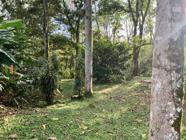 Terreno Cartago>Turrialba>Turrialba - Venta:173.000 US Dollar - codigo: 21-215