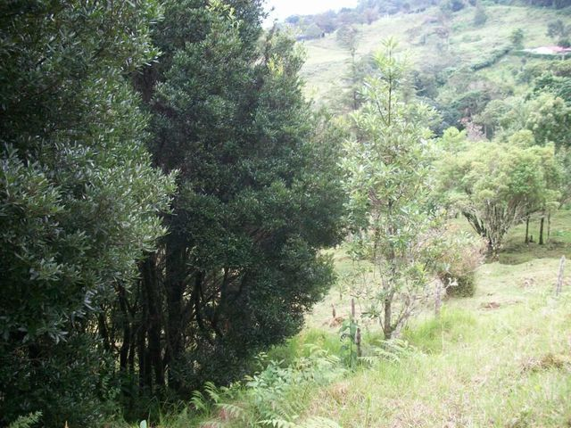 Terreno San Jose>El Jardin>Dota - Venta:64.000 US Dollar - codigo: 21-498