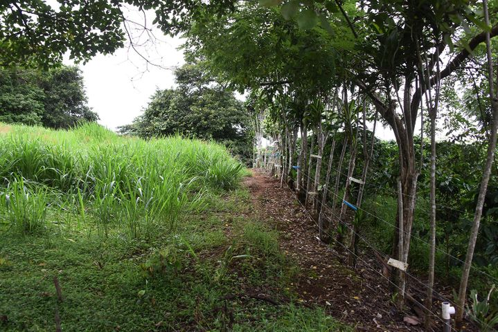 Terreno Alajuela>Alajuela>Poas - Venta:800.000 US Dollar - codigo: 21-715
