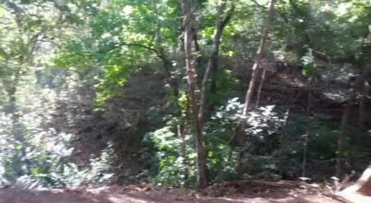 Terreno Guanacaste>Liberia>Santa Cruz - Alquiler:544.000 US Dollar - codigo: 21-1388