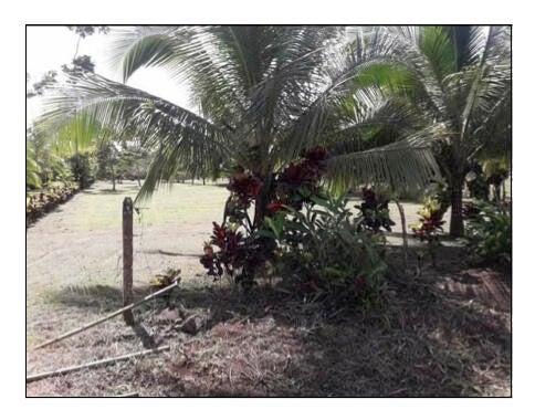 Terreno Alajuela>Alajuela>San Carlos - Venta:53.000 US Dollar - codigo: 21-2423