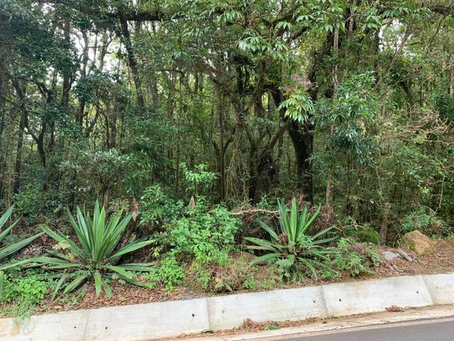 Terreno San Jose>El Jardin>Dota - Venta:104.000 US Dollar - codigo: 21-2533