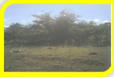 Terreno Distrito Nacional>Santo Domingo>Altos de Arroyo Hondo - Venta:1.000.000 Pesos - codigo: 17-1039