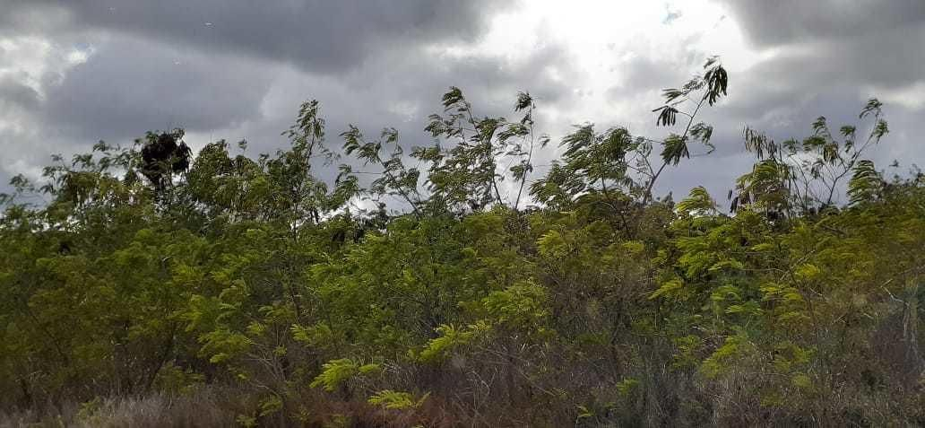 Terreno La Altagracia>Punta Cana>Bavaro - Venta:650.000 Dolares - codigo: 21-1720