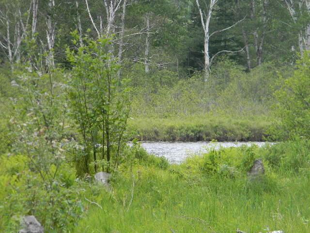 0000 S Riverrun Dr. Lot 49, Trout Lake, MI 49793
