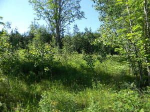 000 McNearney Trail, Hulbert, MI 49748