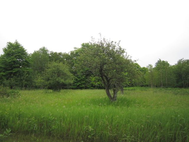 20 acres S Hulbert RD, Hulbert, MI 49748