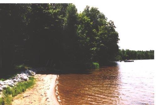 Sandy shorelie