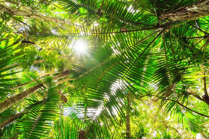Puerto Rico Vegetation