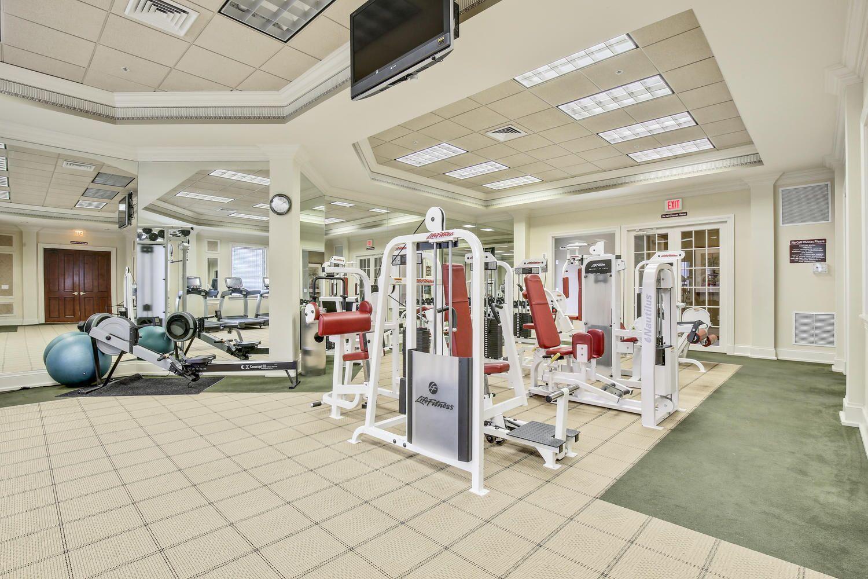 OR Gym Ammenites 1