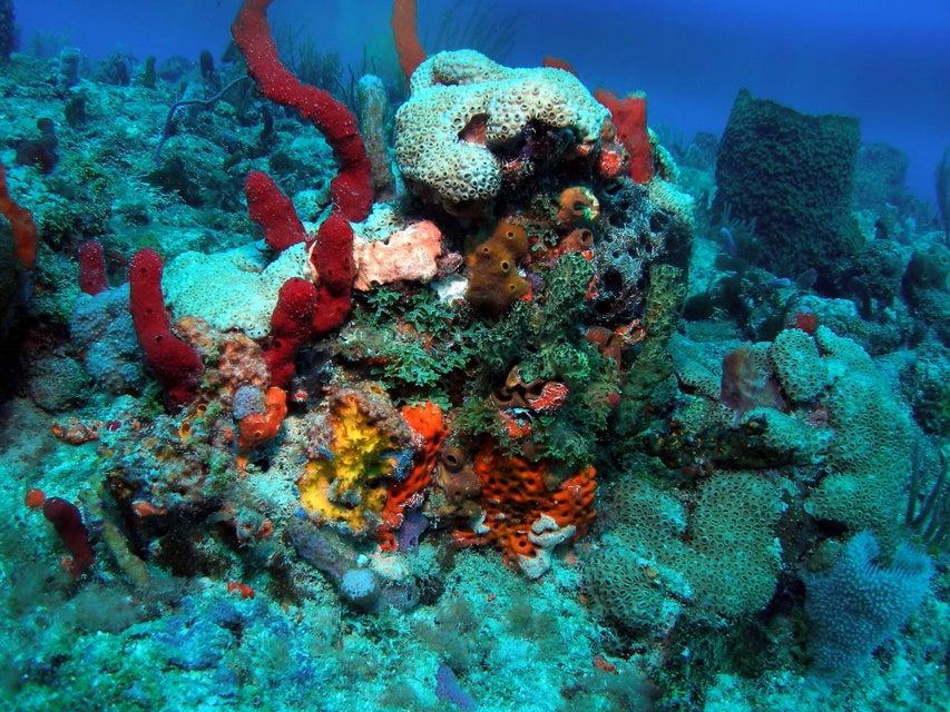 Copy (2) of Explore our Ocean