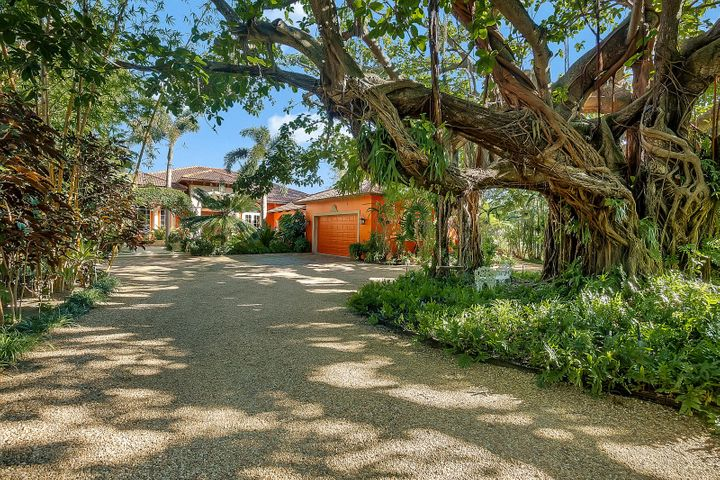 Drive around Spectacular Banyan Tree to Parking Platform
