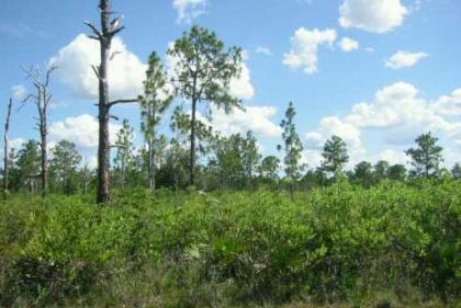 0 Valencia Drive, Lake Wales, FL 33898