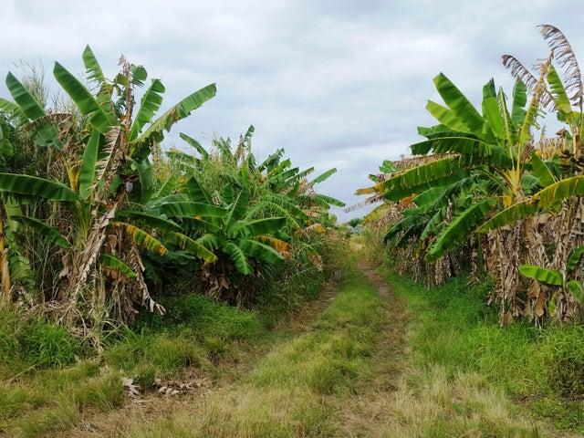 Bananas and Palm Trees
