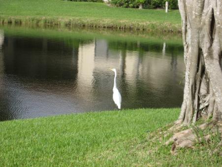 6826 Willow Wood Drive, 707, Boca Raton, FL 33434