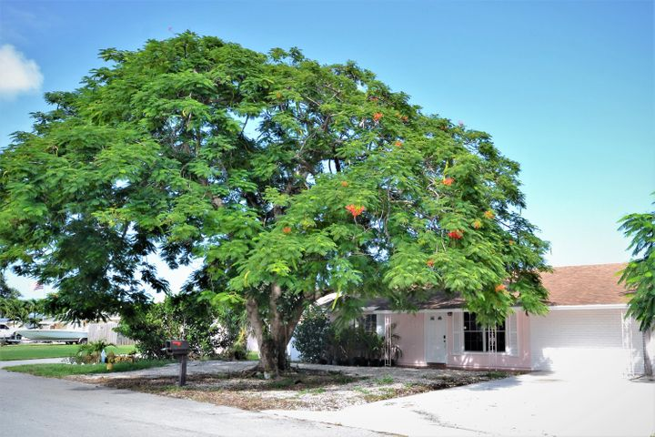 Curb Appeal , Large tree for shade