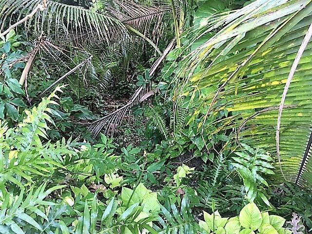 CHALAN LUNA RTE 4, Ordot-Chalan Pago, GU 96910 - Photo #2