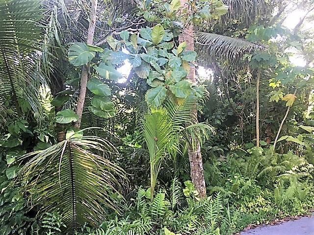 CHALAN LUNA RTE 4, Ordot-Chalan Pago, GU 96910 - Photo #5