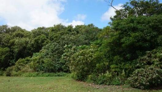Chalan Bada Lot 5, Yigo, Guam 96929