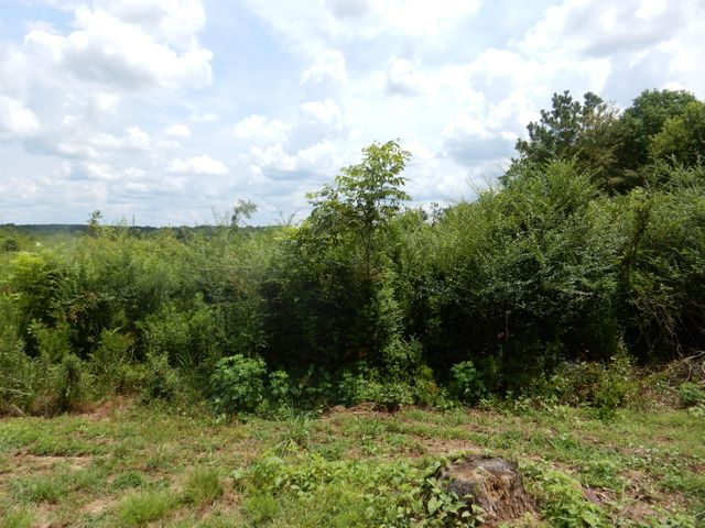 40 acres ready for development. Natural growth.