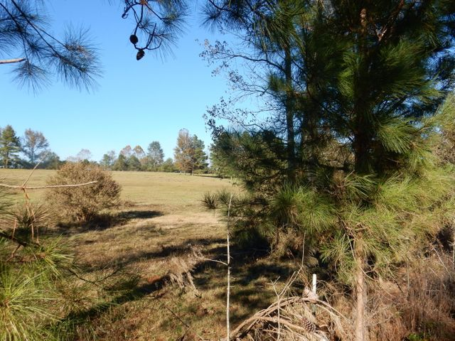 Seven acres cleared and fenced.