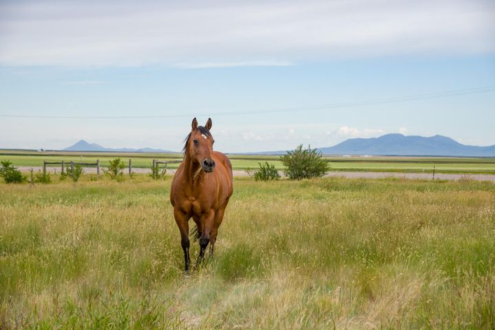 Sweetgrass Hills in the background