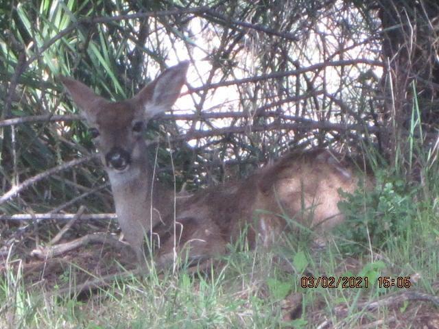287 Bambi Drive, Shelter Cove, CA 95589