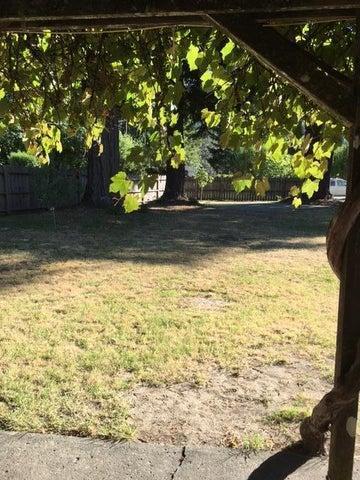 Wonderful shade trees