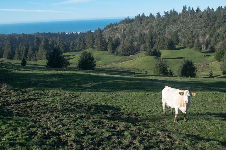 +/-480 Acres Poole Road, Ferndale, CA 95536