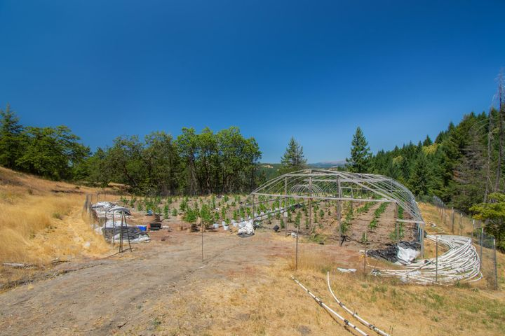 000 Buck Mountain Road, Bridgeville, CA 95526