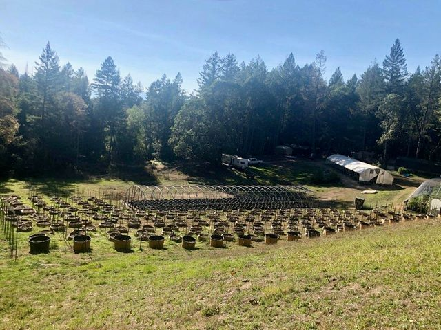 0000 Stewart Ranch Road, Blocksburg, CA 95514
