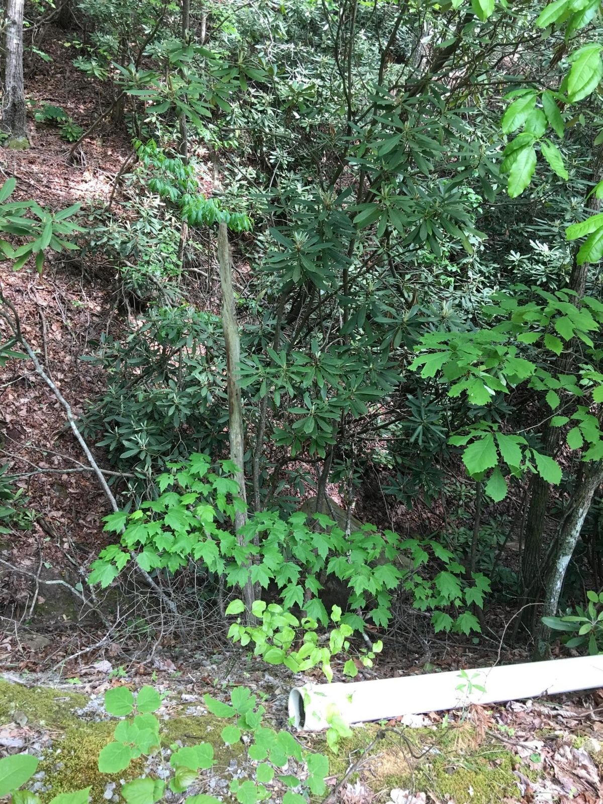 Downhill back yard