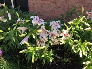 Spring-Summer-Flowers-3