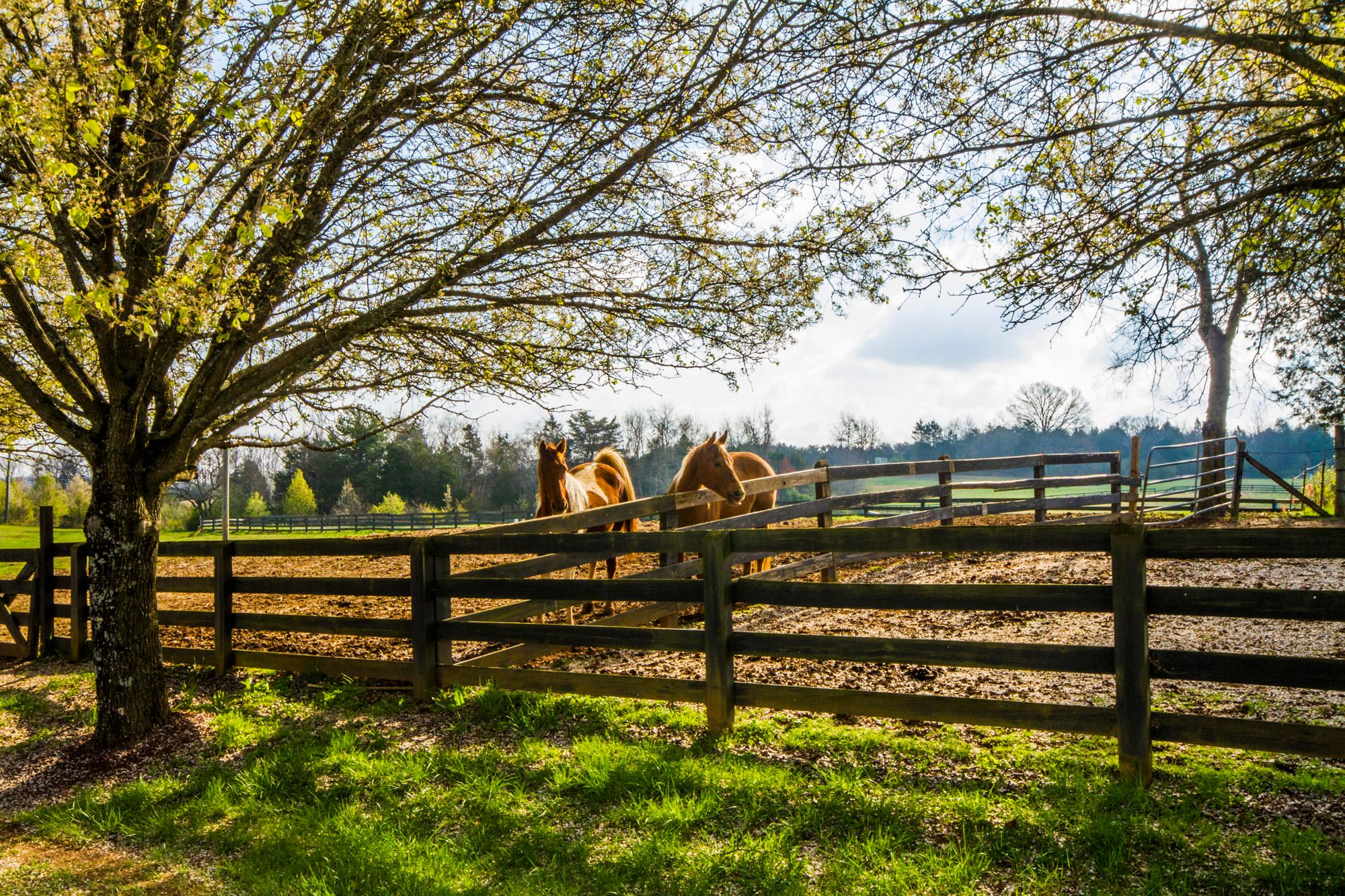 The Horses Welcome you Home...