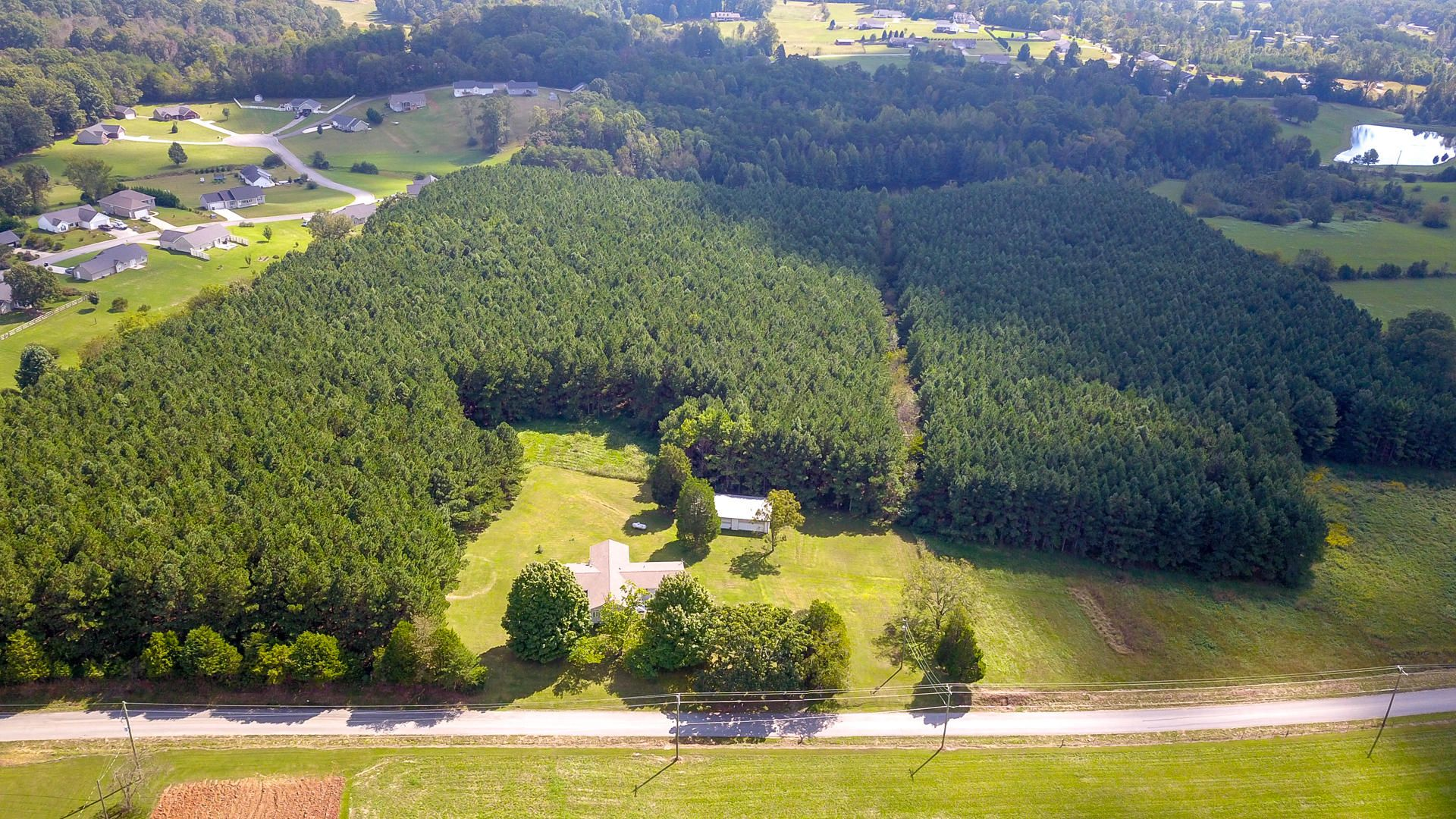 10,000 carefully planted pine trees