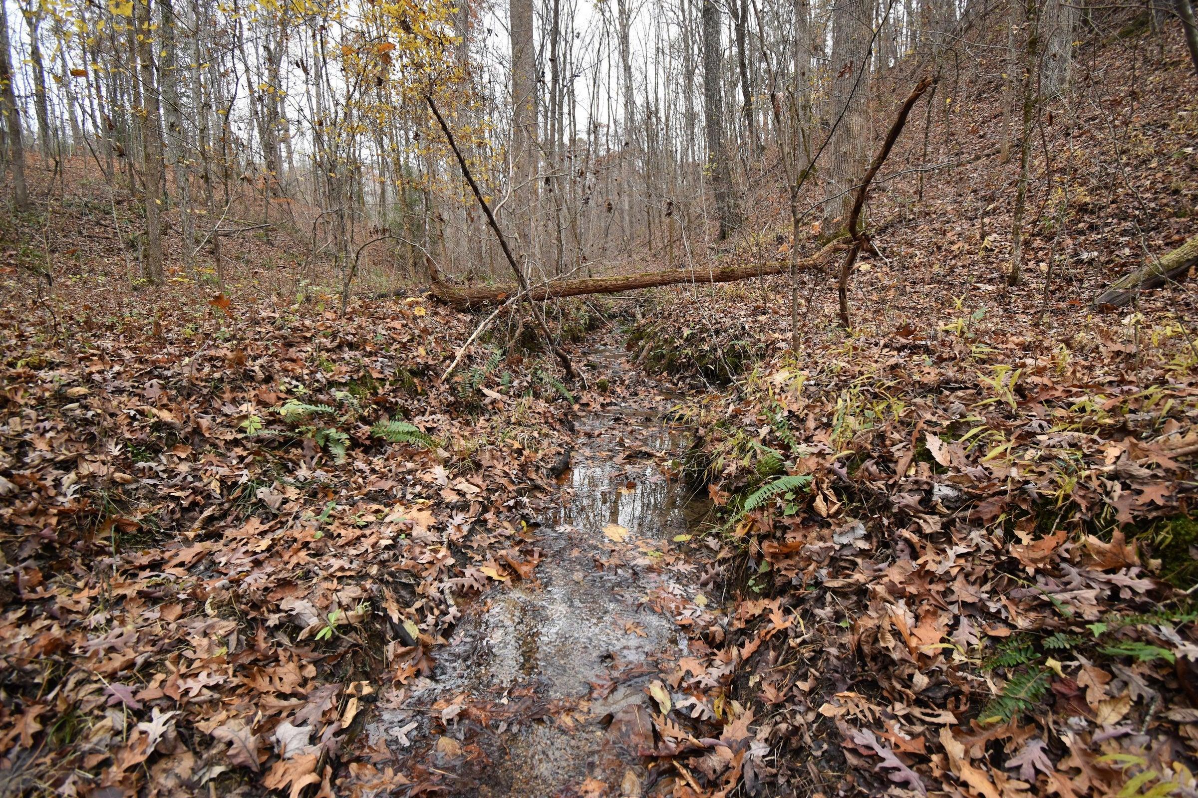 Spring-fed Stream